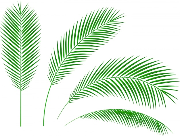 Print palm branches white background