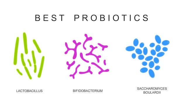 Probiotics set beneficial bacterias for human health and beauty
