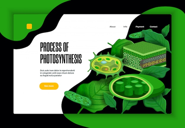 Process of photosynthesis concept educational website banner design with green leaves light transformation chloroplasts structure