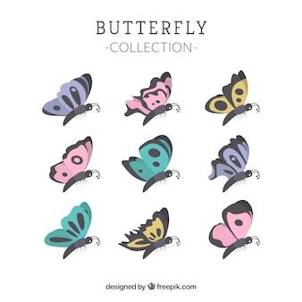 プロフィール蝶のコレクション