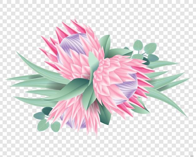 Protea flowers vector