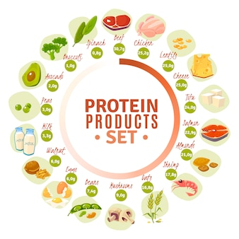 Protein containing products flat circle diagram
