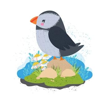 ツノメドリ。美しいかわいい鳥