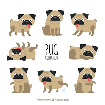 Pug collection with classic style