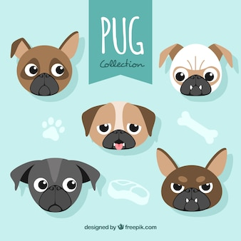 Pug faces with funny style