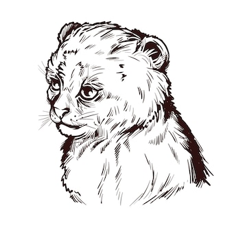 Puma baby, portrait of exotic animal isolated sketch. hand drawn illustration.