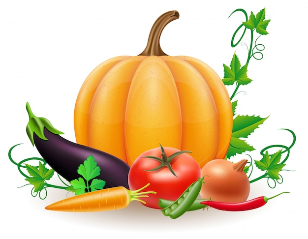 Pumpkin and autumn harvest vegetables vector illustration