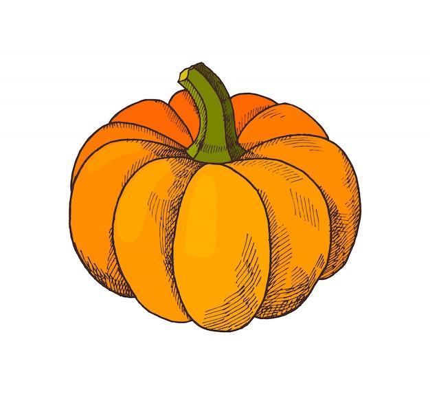 Pumpkin autumn harvesting season isolated