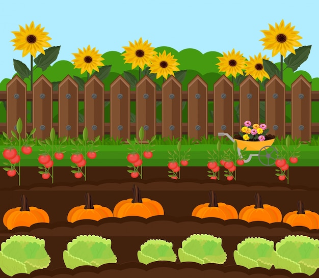 Сад урожая тыквы векторный. иллюстрации в сельской местности
