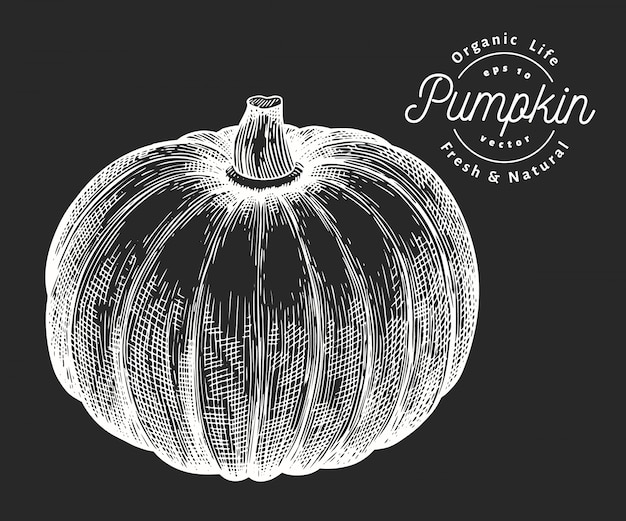 Pumpkin illustration. hand drawn vector vegetable illustration on chalk board. engraved style