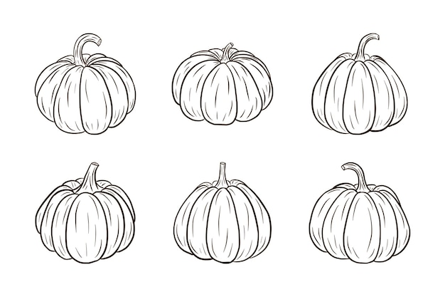 Pumpkin illustrations set. fresh ripe pumpkins collection for stickers, prints, invitation, menu and greeting cards design and decoration. premium vector