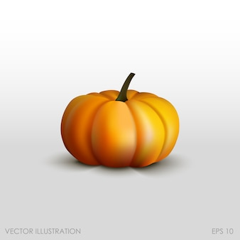 Pumpkin in a realistic style on white