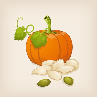 Pumpkin and  seeds.  illustration.