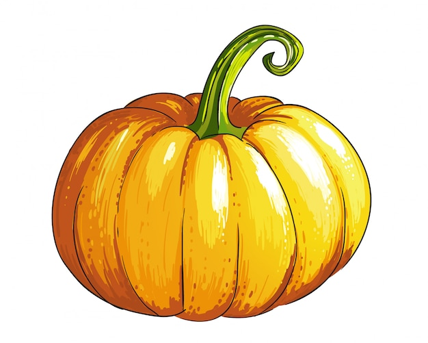 Pumpkin in sketch style.
