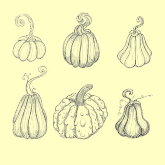 Pumpkin, squash and gourd vegetable cartoon icons.