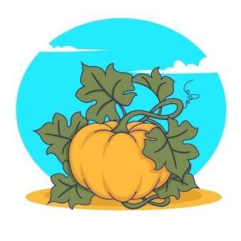 Pumpkin vegetable fruit  on white background