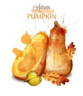 Pumpkin watercolor isolated