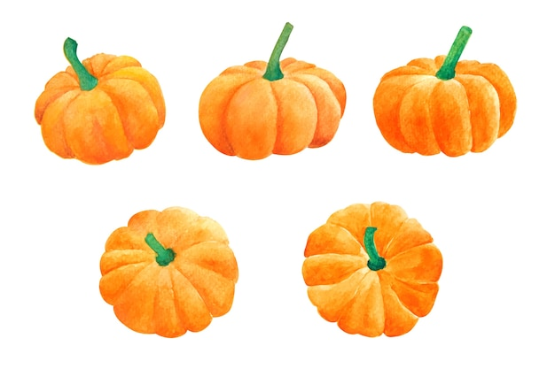 Pumpkins by a watercolour on isolated white background