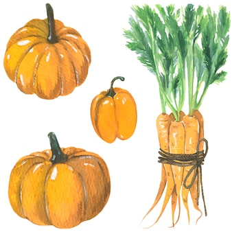 Pumpkins orange bell pepper and carrots watercolor illustration vector isolated elements