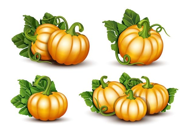 Pumpkins with leaves isolated illustration