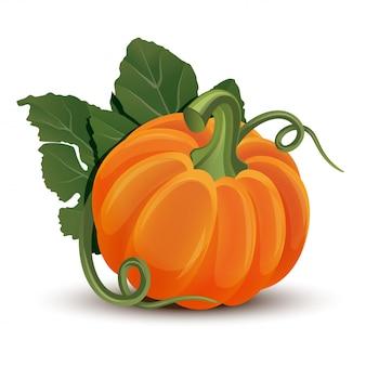 白い背景の上の葉を持つカボチャ。熟したオレンジのカボチャ-ハロウィーン、秋の収穫祭、感謝祭のスカッシュ。環境にやさしい野菜。