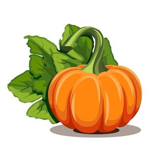 Pumpkins with leaves  on white background.  illustration ripe orange pumpkin - squash for halloween, autumn harvest festival or thanksgiving day. environmentally friendly vegetables.