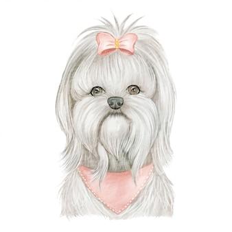リボンの水彩イラストがかわいい子犬のマルチーズ犬