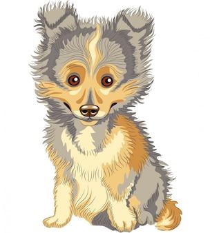 Puppy shetland sheepdog, sheltie, dog breed smile
