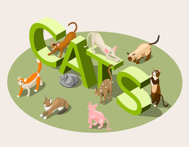 Purebred cats isometric