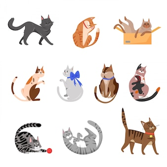 純血種の猫、遊び心のあるペットイラストセット