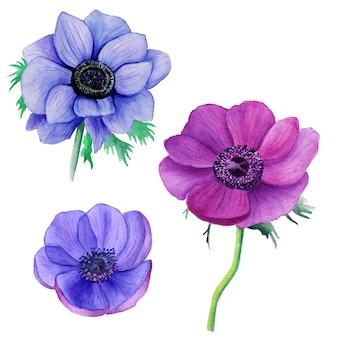 紫と青のアネモネ