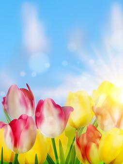 Фиолетовые и желтые тюльпаны на фоне неба.