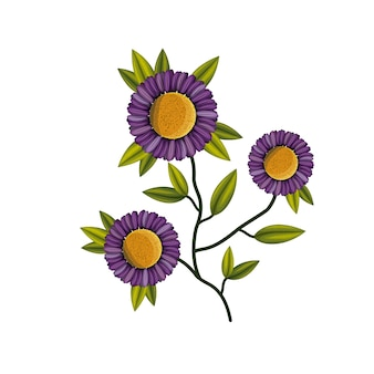 Purple daisy flower plant in white background