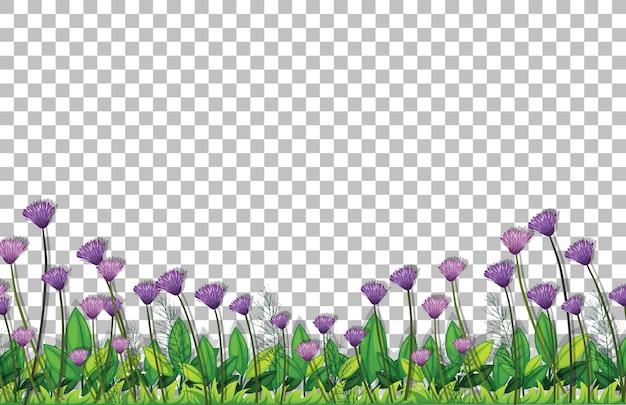 透明な背景に紫の花畑