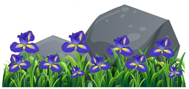 정원에서 보라색 아일랜드 꽃