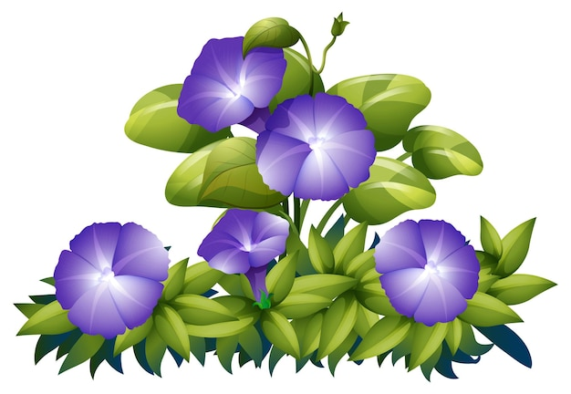 Purple morning glory in the bush