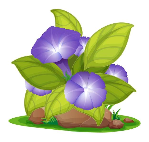 Purple morning glory in the garden