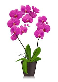 Purple orchid in flowerpot