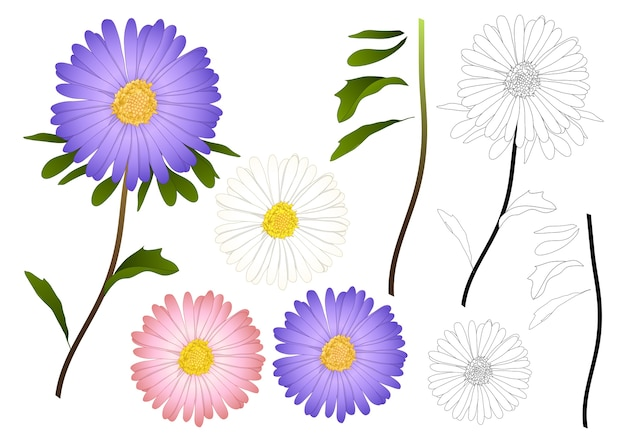 Purple pink and white aster outline