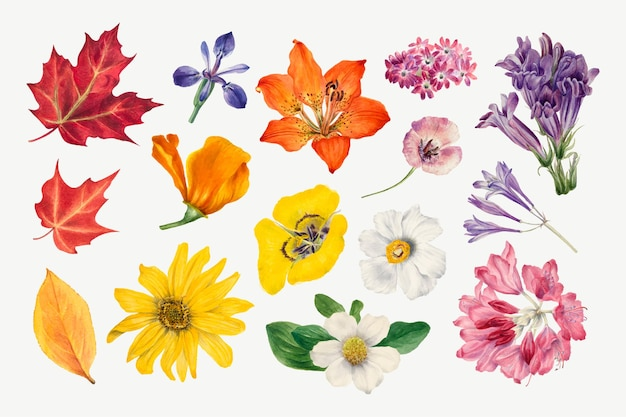 メアリーヴォーウォルコットのアートワークからリミックスされた紫色の野生植物のイラスト手描きセット