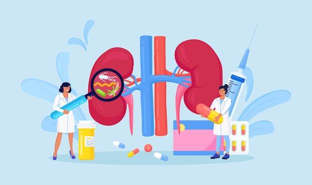 신우신염. 작은 의사 신장 전문의는 신장 신장 질환, 소변 검사, 진단을 가진 환자를 진단하고 검사합니다. 의사는 신장의 건강을 확인합니다. 신장내장기치료