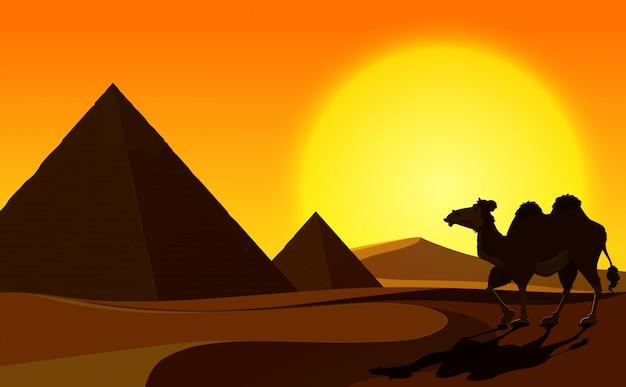 사막 장면 피라미드와 낙 타