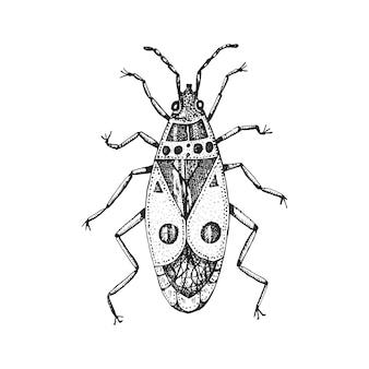 虫カブトムシ。火のバグ、ヴィンテージの古い手描きのスタイルのpyrrhocoris apterusには、図の木版画が刻まれています。
