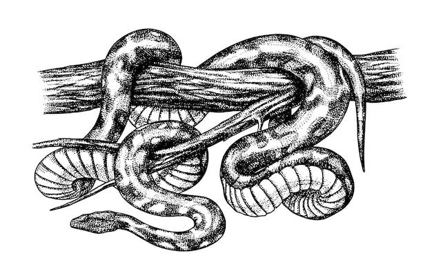 Pythonidae 또는 python boinae 또는 boas 또는 boids nonvenomous 뱀 파충류 그림 새겨진 손