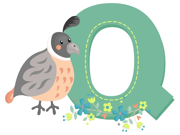 Q for quail