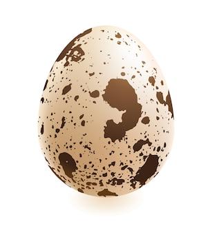 Quail realistic egg