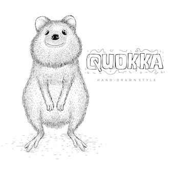 Quokkaのベクターはかわいく見えます。手描き動物イラスト