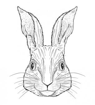 ウサギ動物の魔法の黒の描画