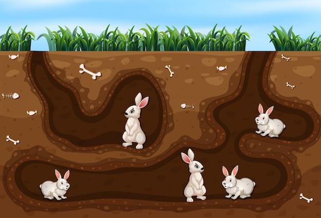 구멍에 사는 토끼 가족