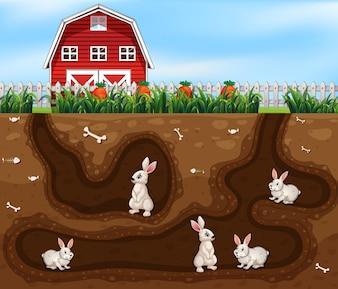Rabbit House Underground the Farm